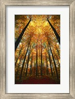 Beginning of Autumn Fine-Art Print