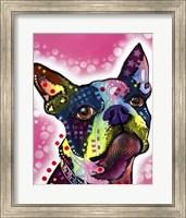 Boston Terrier Fine-Art Print