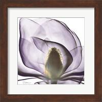 Purple Magnolia Fine-Art Print