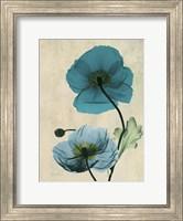 Iceland Poppy 7 Fine-Art Print