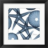 Starfish Trip 2 Fine-Art Print