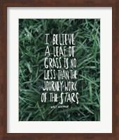 Leaf Of Grass Fine-Art Print