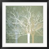 Quiet Forest Fine-Art Print