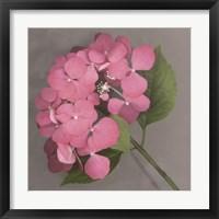 Pink Hydrangea Fine-Art Print