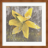 Tulip Fresco (yellow) Fine-Art Print
