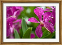 Singapore, National Orchid Garden Fine-Art Print