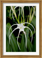 National Orchid Garden, Singapore Fine-Art Print