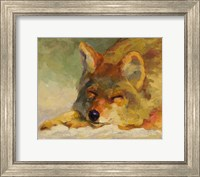 Chillin Coyote Fine-Art Print