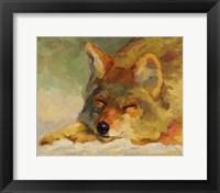Chillin Coyote Fine-Art Print