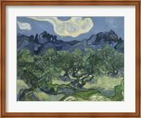 Olive Trees Fine-Art Print