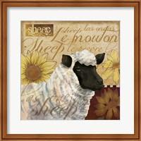 Sheep Fine-Art Print