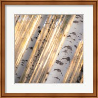 Aspen Light Fine-Art Print