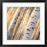 Aspen Light Fine-Art Print
