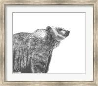 Wildlife Snapshot: Grizzly Fine-Art Print