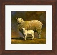 Taffy's Lamb Fine-Art Print