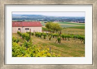 View Over the Mother Vines, Champagne, France Fine-Art Print