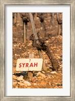 Syrah Vine and Sign at La Truffe de Ventoux Truffle Farm Fine-Art Print