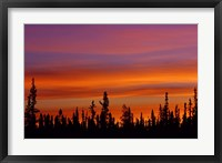 Sunrise Over a Boreal Forest Fine-Art Print