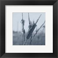 Ice Cattail 1 Fine-Art Print