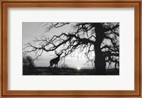 Silhouette Fine-Art Print