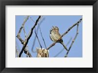 Singing Bird On Branch Fine-Art Print