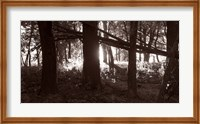 Woods And Sunlight II Fine-Art Print