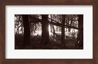 Woods And Sunlight II Fine-Art Print