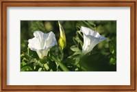 Shades Of Nature White Flower Duo Fine-Art Print