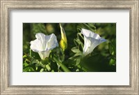 Shades Of Nature White Flower Duo Fine-Art Print