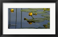 Shades Of Nature Yellow Water Lily II Fine-Art Print