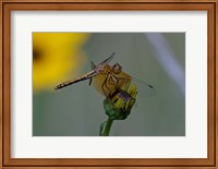 Orange Dragonfly on Green And Yellow Flower Fine-Art Print