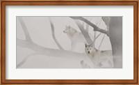 White Wolves In Mist Fine-Art Print