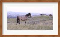 Wild Horses 23 Fine-Art Print