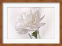 White Flower On Stem Fine-Art Print