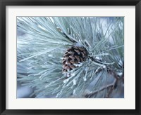 Frosted Pine Cone And Pine Needles III Fine-Art Print