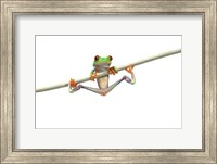 Orange Footed Frog Hanging Fine-Art Print