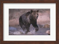 The Bear And The River Fine-Art Print