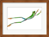 Frog Leap On White II Fine-Art Print