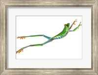 Frog Leap On White II Fine-Art Print