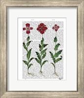 Italian Carnation 1 Fine-Art Print