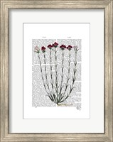 Italian Carnation 4 Fine-Art Print