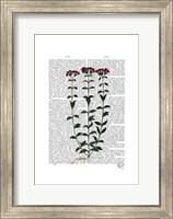Italian Carnation 6 Fine-Art Print