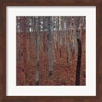 Forrest Of Beech Trees Fine-Art Print