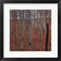 Forrest Of Beech Trees Fine-Art Print