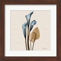 Calla Lily Blue Brown H36 Fine-Art Print