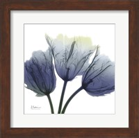 Midnight Tulips Trio Fine-Art Print
