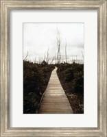 Devastation Trail Fine-Art Print