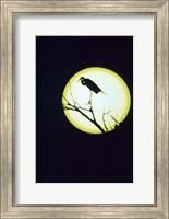 Egret Silhouette Fine-Art Print