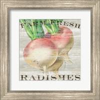 Farm Fresh Radishes Fine-Art Print