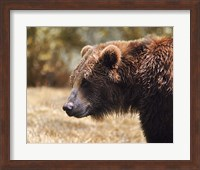 Grizzly Watch Fine-Art Print